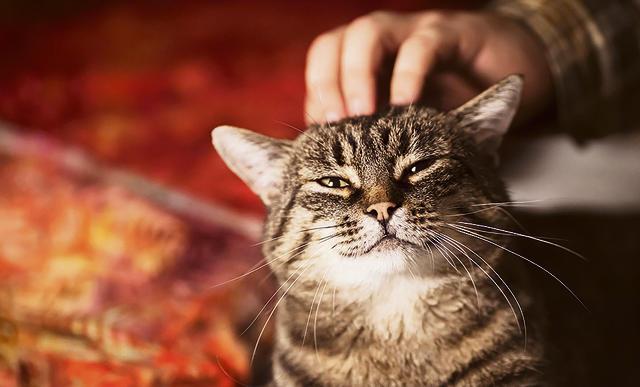 reuma bij katten
