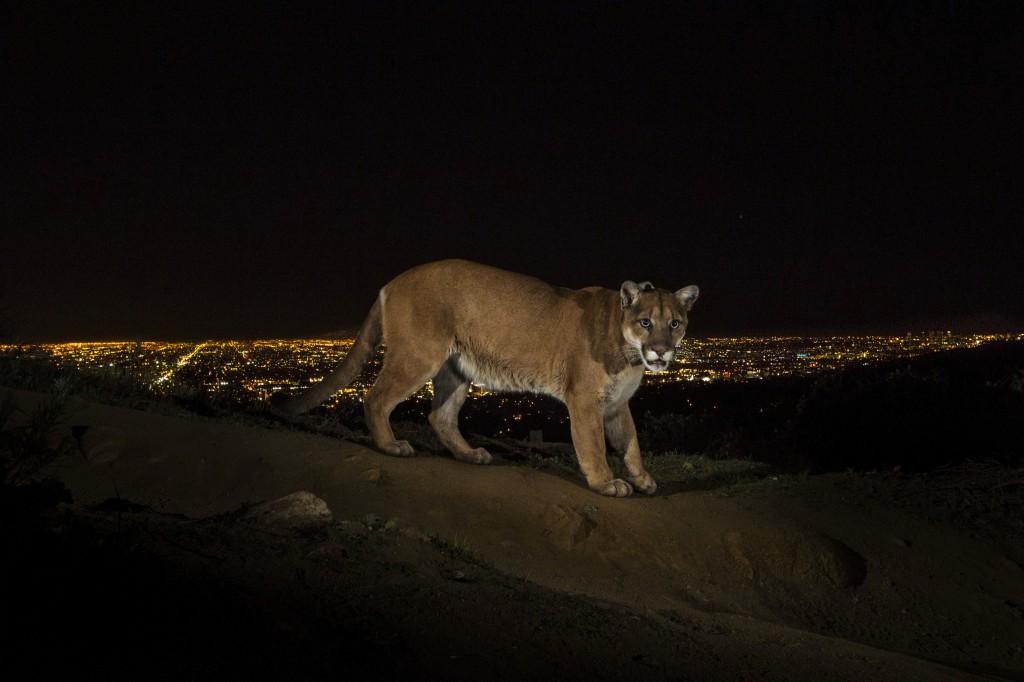 Steve Winter (VS) / National Geographic