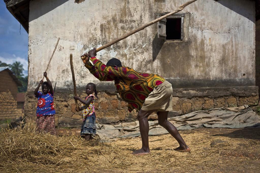 Dorpelingen dorsen rijst in het Guinese dorp Meliandou, 600 kilometer ten zuiden van Conakry, ook wel Ebola's Ground Zero genoemd.
